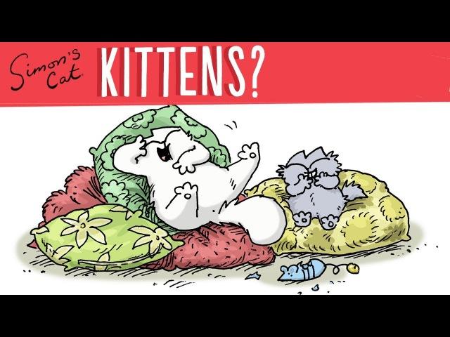 Советы для владельцев котят от кота Саймона