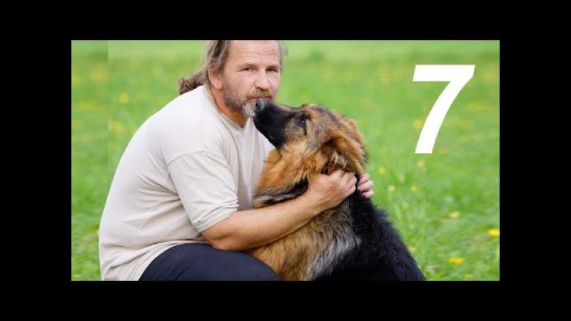 Команда «сидеть» | Урок 7 видеокурса «Растем вместе»