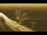 Затонувшие деревья на дне реки Обь. Видео с подводной камеры