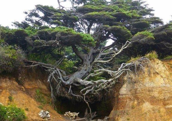 Дерево цепляется за жизнь
