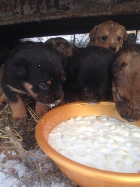⚠Истощенная собака с 9 щенками!!!! ВСЕМ кто переживал за нас,помогал м