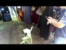...удивительные кадры, записанные в Малайзии..Таинственный белый кот появился во время похорон в Малайзии и отказывался покидат