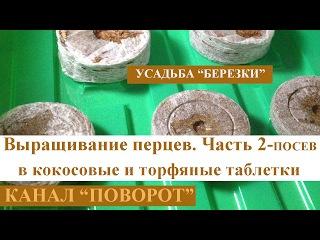Выращивание перцев. Часть 2. Посев семян в торфяные и кокосовые табблетки