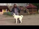 """Выступление собак в парке аттракционов около """"Таблетки"""""""