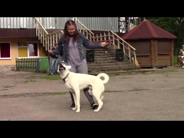 Выступление собак в парке аттракционов около Таблетки