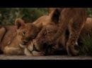 Последние львы(The Last Lions). Изгнанная львица | National Geographic, 2011