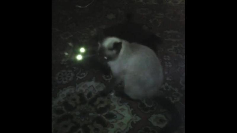 Кошек черти раздирают