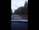 Медведь на трассе под Казачинском