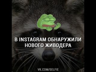 В Instagram обнаружили нового