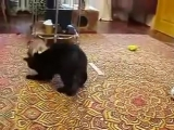 Ласки против Кошка