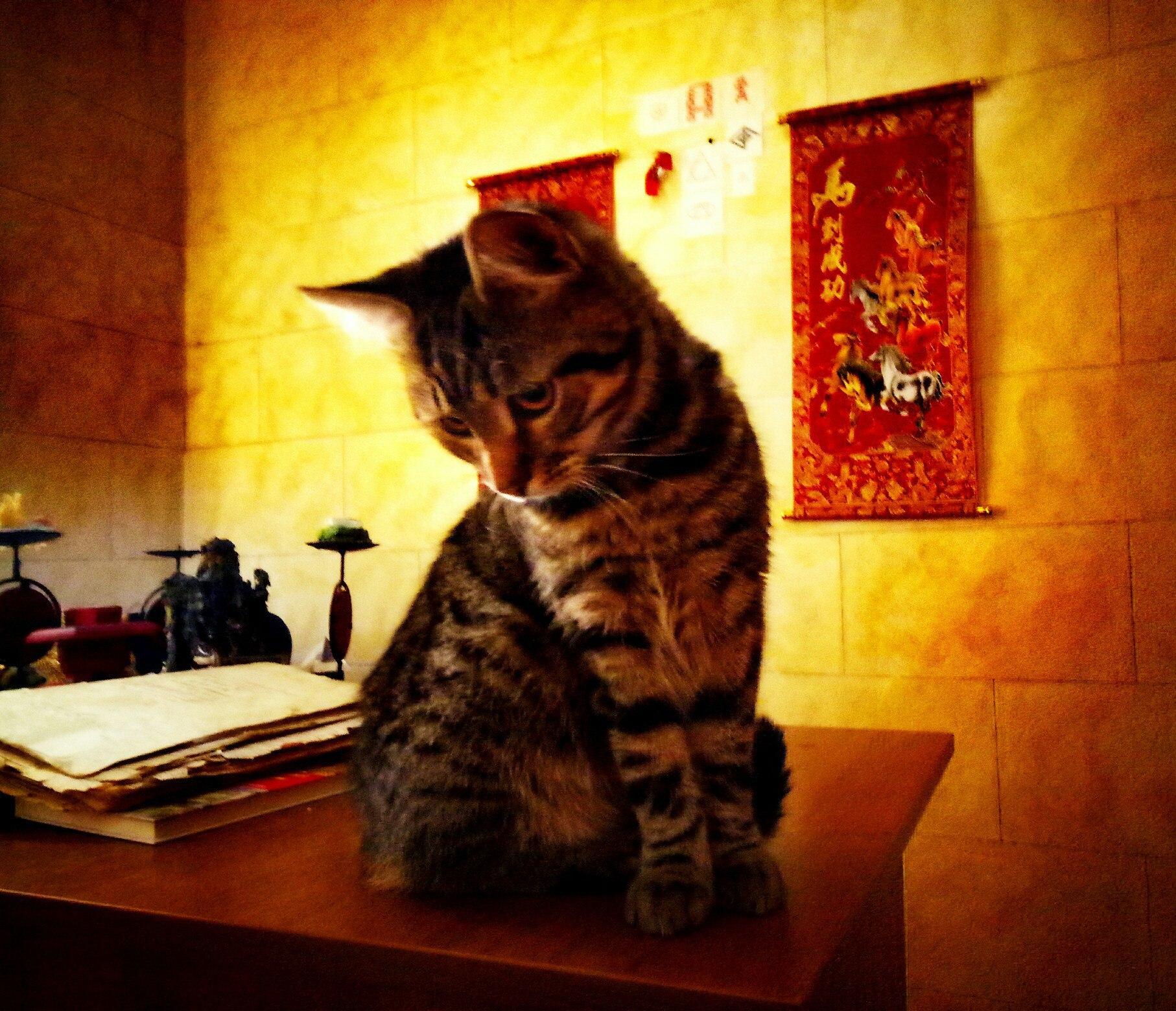 Хештег кот на   Салон Магии и Мистики Елены Руденко. Киев ,тел: +380506251562 9kRQx6Zf1mE
