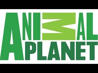 Assistir TV Animal Planet Ao Vivo e HD