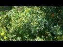 Huerto Orgánico (Mini bosque) - 07/10/2016