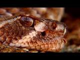 Самые опасные. Необычные змеи в мире. Документальные фильмы National Geographic. Nat Geo WILD HD