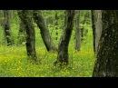 Расслабляющие звуки Весеннего леса.пение птиц , звуки природы. UHD Video 2160p