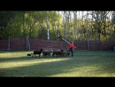 Фьюча в Нафани, май 2017: учимся пасти барашков :-)