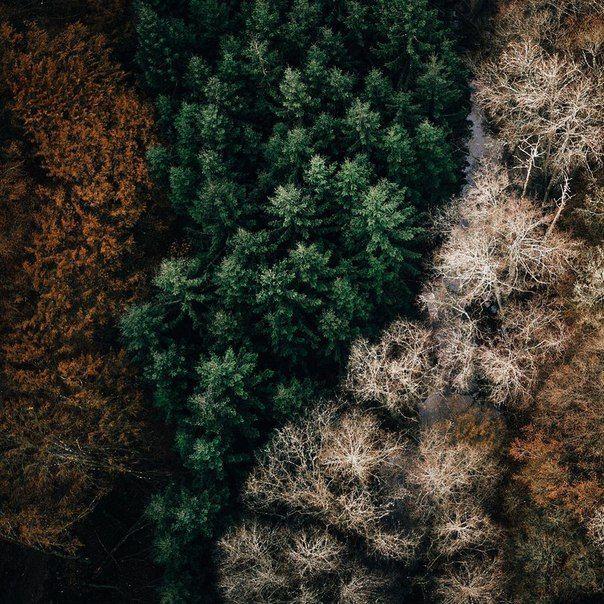 Лес бывает разным.