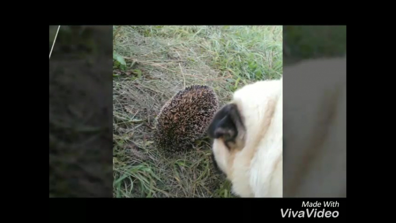 XiaoYing_Video_1502713049868.mp4