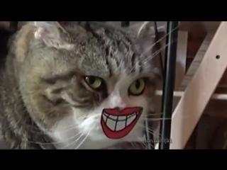 Как улыбаются коты