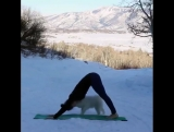 Мохнатый тренер по йоге
