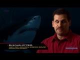 5. Войны Юрского периода (Jurassic Fight Club) 2008. Морские охотники (Deep Sea Killers)