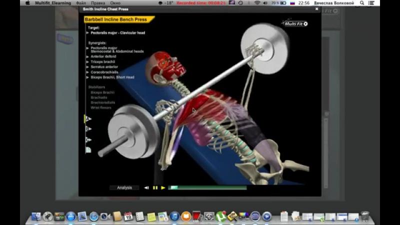 Анатомия большой грудной мышцы
