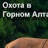 Охота и фотоохота в Горном-Алтае