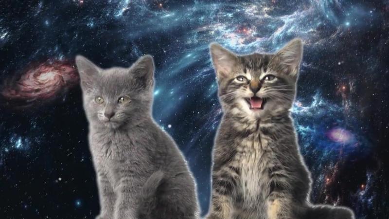 Space Cats: 18 БЕСПЛАТНЫХ видеоуроков ЗАБРАТЬ Здесь:>>> yadi.sk/d/HDOpkfTL3LVmNw