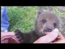 Медведица спасает медвежонка и другие приключения медвежат
