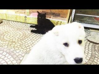 Бенгальский кот , белый мишка и другие