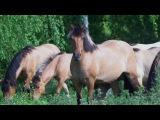 Полнометражный фильм о Природном парке