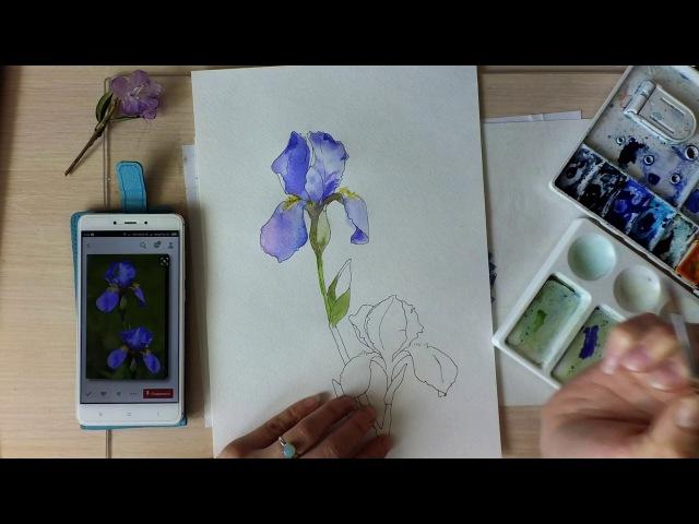 Скетч гелевой ручкой и акварелью Ирисы Очень ускоренное видео Speed painting