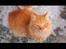 Приколы с котами ДО СЛЁЗ 2017 Смешные Коты Видео с кошками · coub, коуб