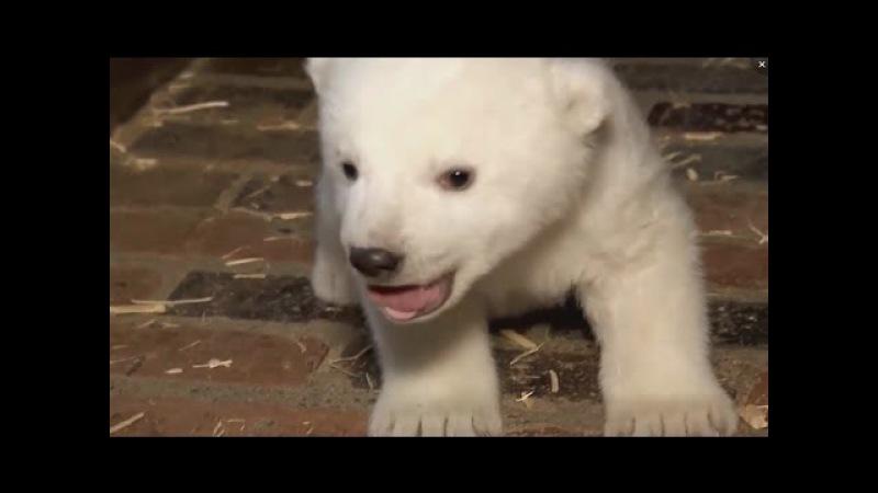 Берлин. Медведица приучает медвежонка к порядку на кухне