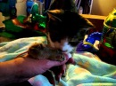 Cat cleans and licks mouse - Lady T kissing Lacey