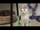 ОСОБЫЙ котенок ищет ДОМ и нашего ЧЕЛОВЕКА. Котенок мальчик, зовут Мадрид, 2.5 мес