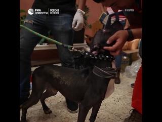 Приют для пострадавших от землетрясения животных