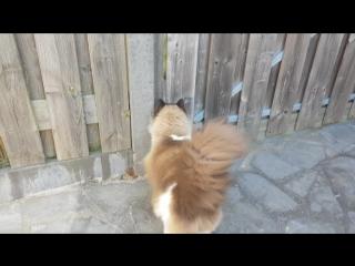 Кошачья романтика
