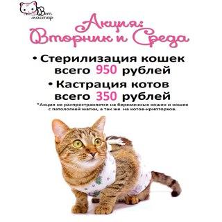 Сколько стоит в кирове кастрация кота