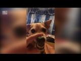 Пёс не любит вертикальное видео.