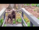 Собака переносит палку через узкий мост