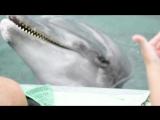 пение дельфинов. Настя дирижер