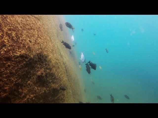 Kande Island Lake Malawi - African Cichlids - HD Underwater Footage