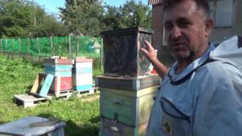 Хотите завести пчел, но нет денег..... Часть №3 Снятие роев