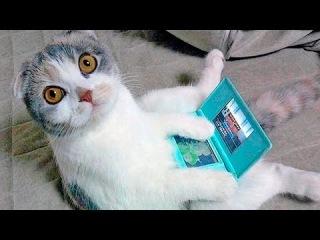 Зверски забавные кошки | приколы с животными.
