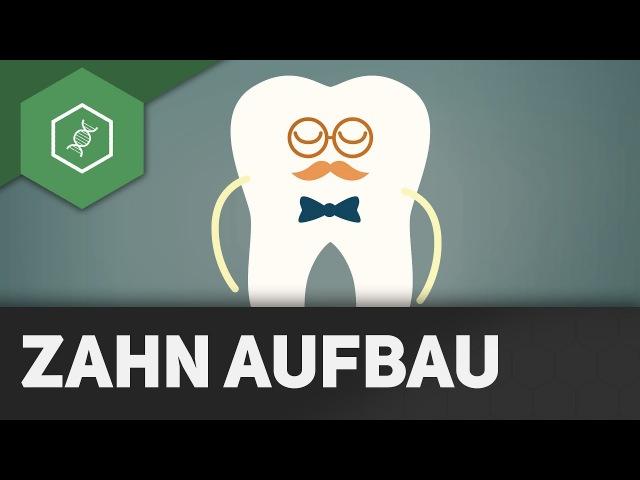 Zahn-Aufbau