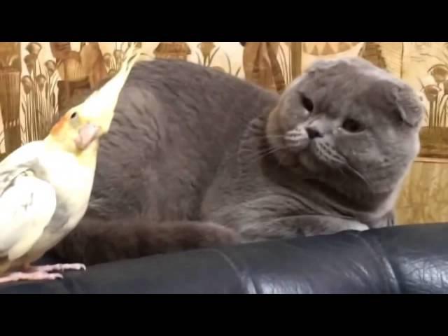 Приколы коты и попугаи