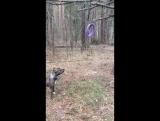Афина веселится в лесу )