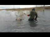 шардара рыбалка