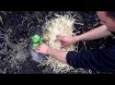 Секреты высадки арбузов Выращивание арбузов Как правильно высадить арбуз